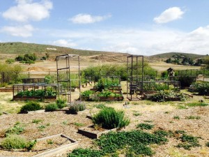 SEEd Project Garden