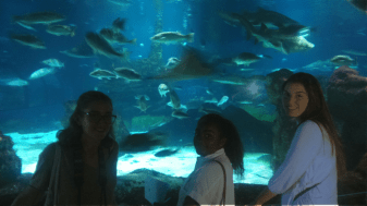 """Oceanography"" students at the Aquarium of Barcelona."