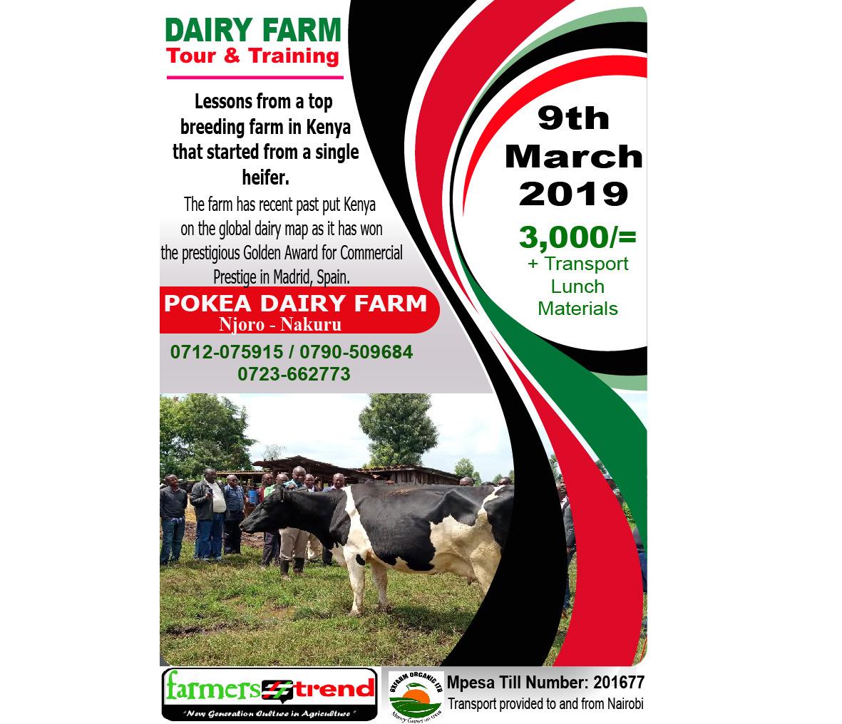 Pokea farm nakuru- dairy farming kenya