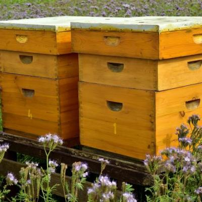 Langsroth Bee Hive