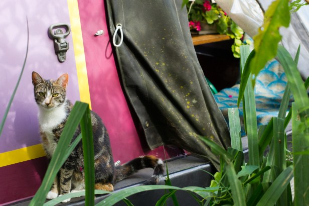 Houseboat Cat, Oxford Canal