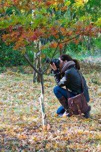 opw-harcourt-arboretum-3