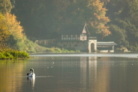 Swan on the Lake, Blenheim Palace, Oxfordshire © Venca J.