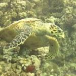red-sea-diving_020212_0384.jpg
