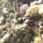 red-sea-diving_280112_0192.jpg