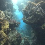 red-sea-diving_300112_0359.jpg