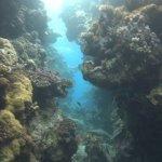 red-sea-diving_300112_0359.jpg