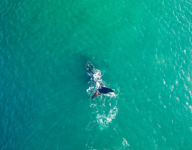 2 x Whale blog