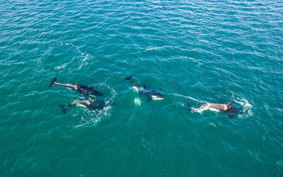 Orca 5 blog