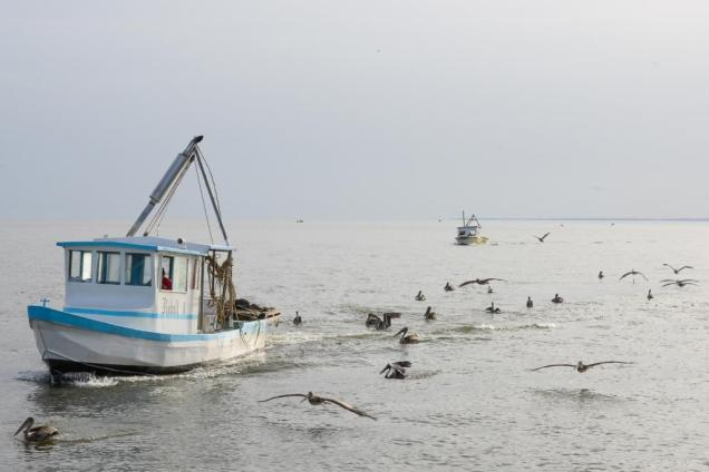 7 Retour de pêche au petit matin à Livingston