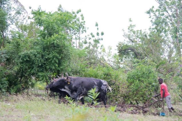 10-agriculture-en-haiti
