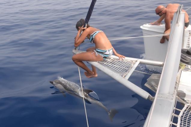 23-anne-laure-et-jerome-admirent-les-dauphins