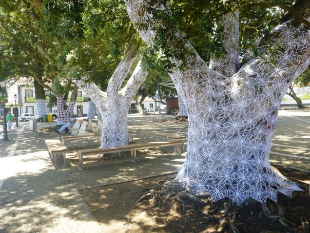 5-les-arbres-emmaillotes-de-graciosa