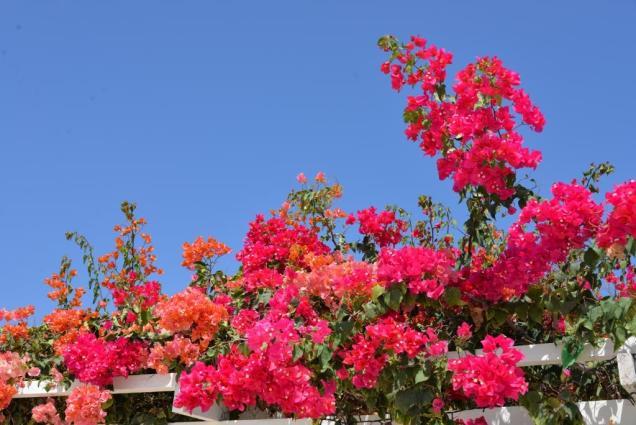 Photo-16 fleurs