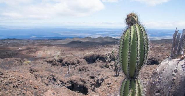 5 Sommet du volcan Sierra Negra sur l'île de Isabela