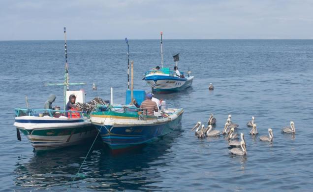57 Barques Pêcheurs