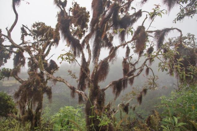 6bis mousse sur arbres