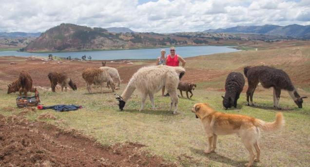 1 Rando avec Lamas & Alpagas