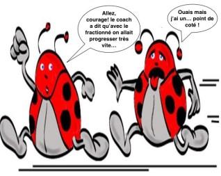 coccinelles_ox