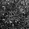 I Found Myself Within a Dark Forest (detail 03)