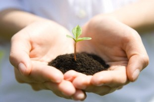 Woman holding seedling on hands, close up