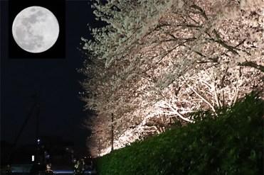 ブルームーンと夜桜