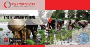 FAO International Internship In Rome