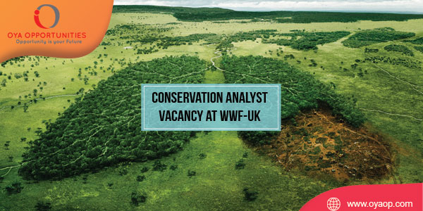 Conservation Analyst Vacancy at WWF United Kingdom