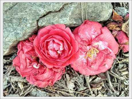 #everydayisflower - Odd..