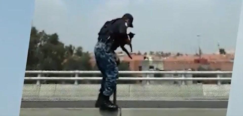 Así rescató un policía a un gatito lastimado en el Periférico de la CDMX