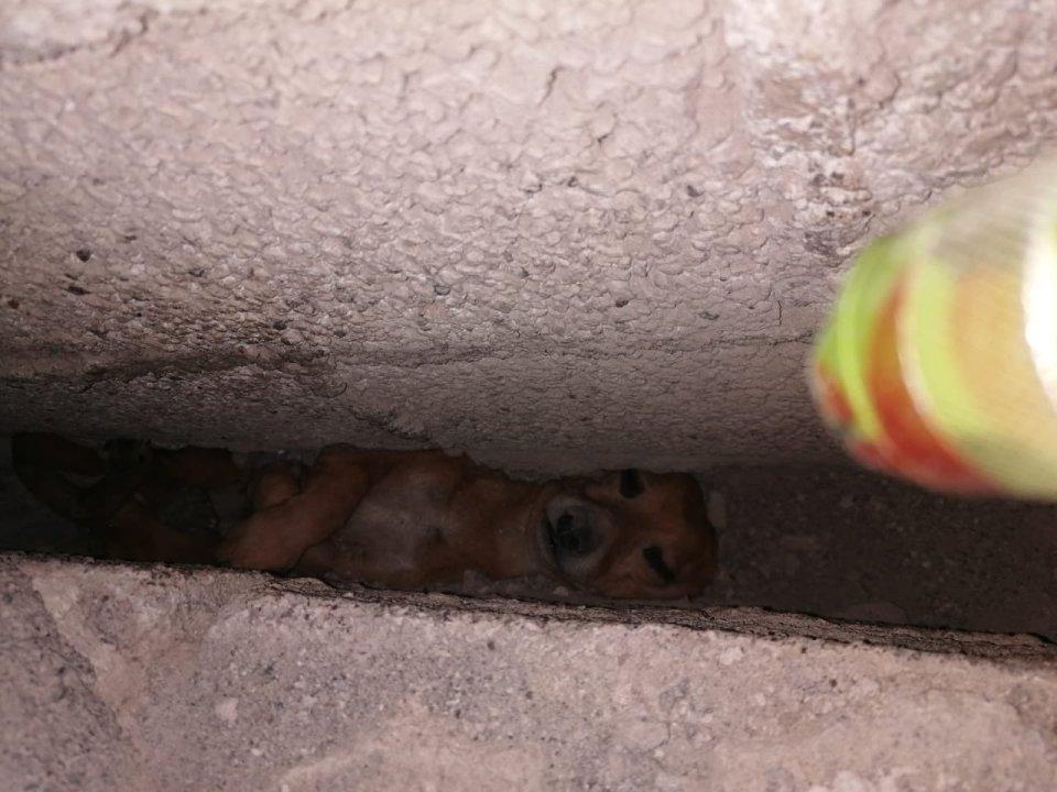 Se rifaron: Policías de Neza rescatan a un perrito que quedó atrapado entre dos muros