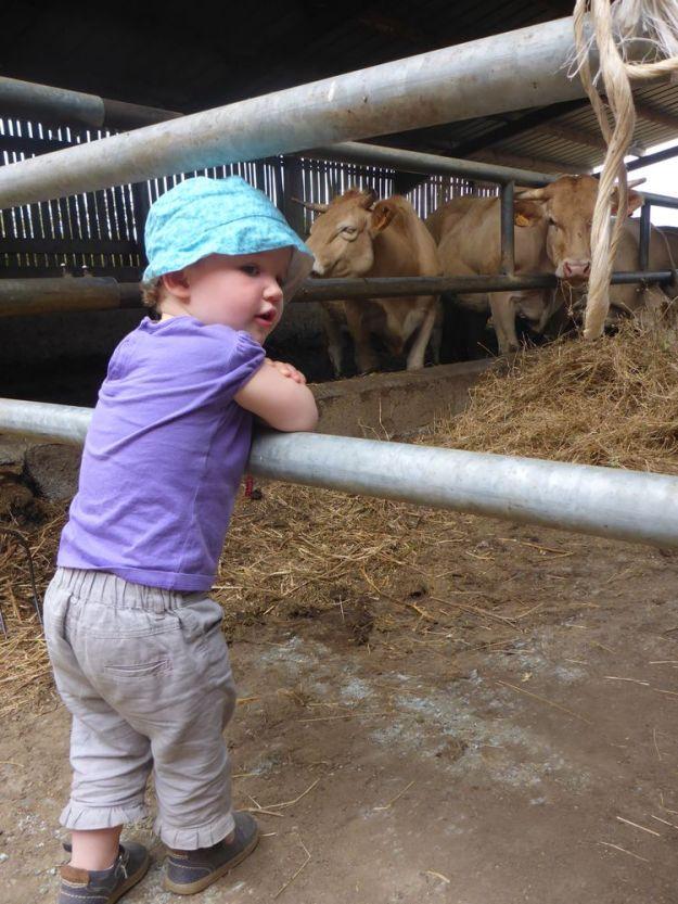 Des vaches | Cows