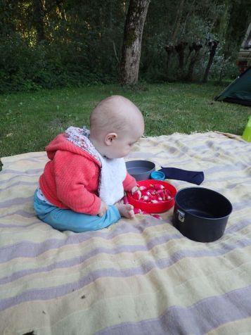 Clovis prépare les radis
