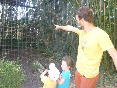 Visite du Parc des oiseaux   Visit of the Bird park