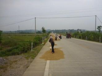 Sechage du riz | Drying rice