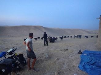 Montage de la tente avec un berger | We pitched the tent with a shepherd