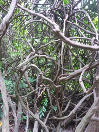 Jardin botanique | Botanical garden
