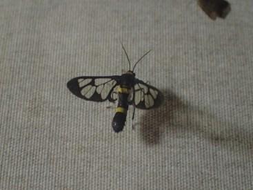 Fête des insectes | Bugs party