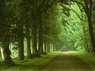 pathwaysscenerytreesgarden-fe9cdcad22db9746d954c2074adb6905_h