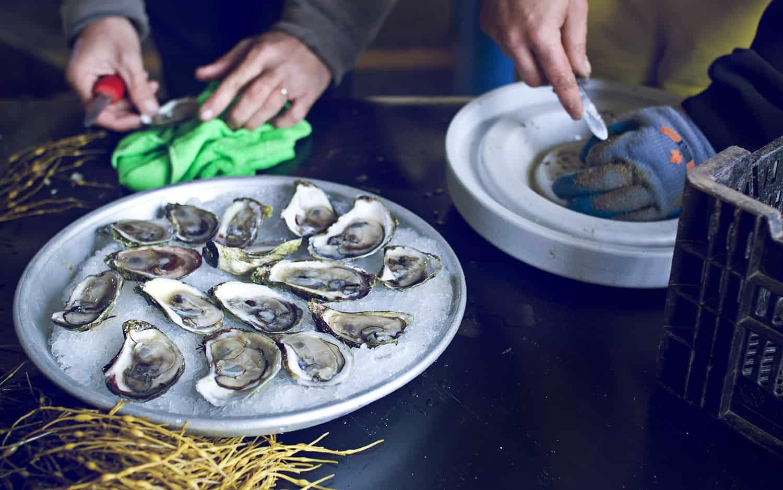 Oyster Festival Halifax Nova Scotia - The Coast