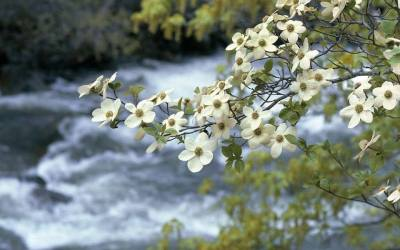 32nd Annual Dogwood Days Festival Coming to Horseshoe Bend