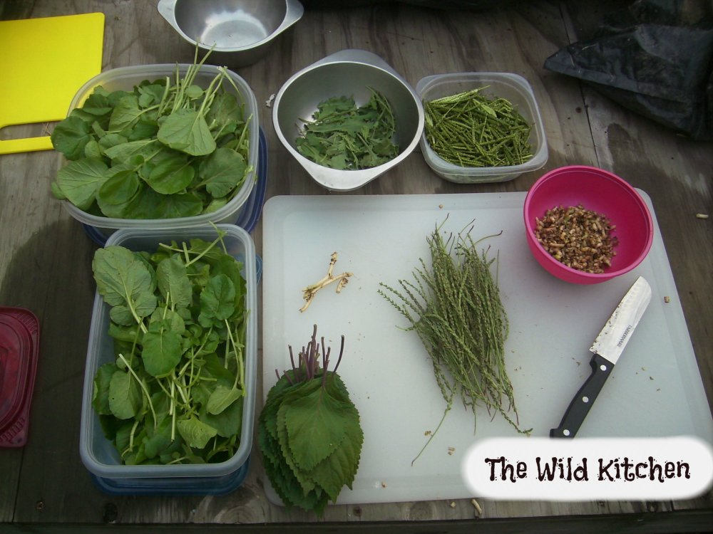 The Wild Kitchen and Simplifying Blogging