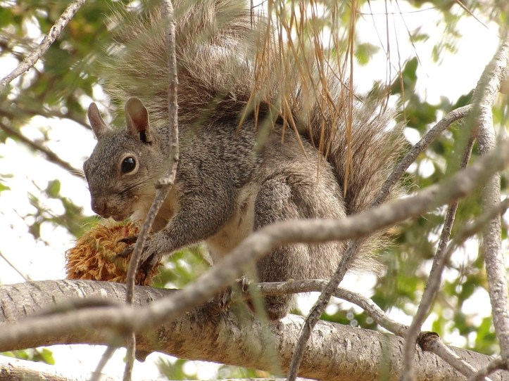 squirrel-1709383_1280