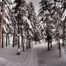 Oku Nikko Marunuma Kogen: Highest Peak & Hip Snowboarders