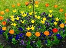 Маленькие клумбы для маленьких садов