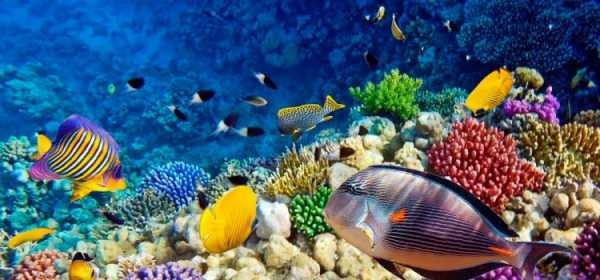 Рыба красная морская – описание с названиями и фото, ядовитые