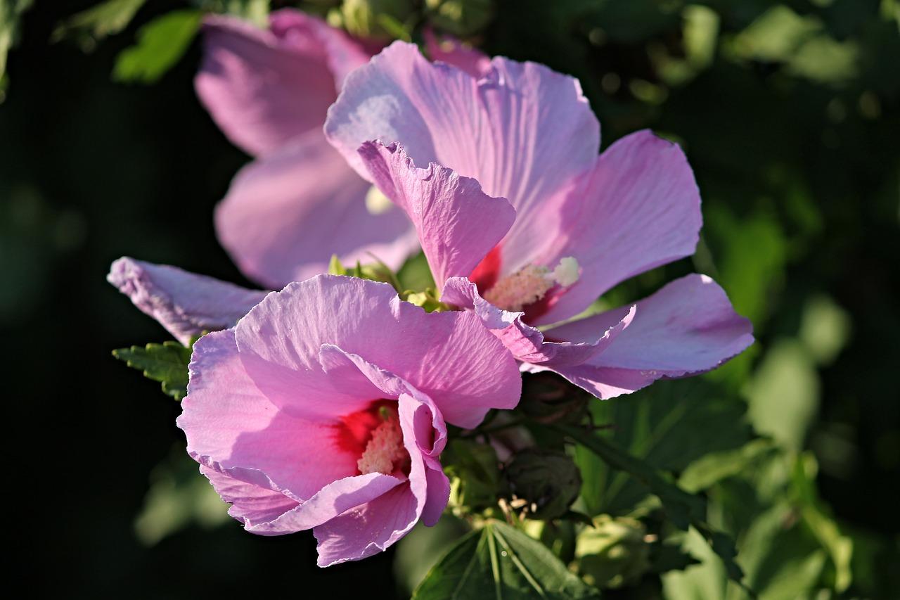 Yabani Ot Ve çiçek Isimleri Karadeniz Bölgesi özhan öztürk