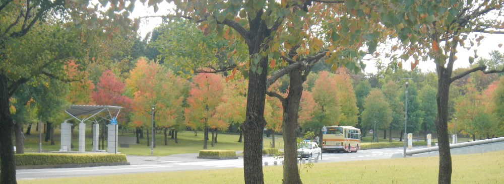 sfc in the autumn  (2/4)