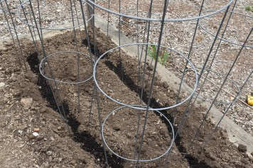 tomato cages over trench