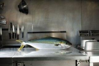 kingfish-01